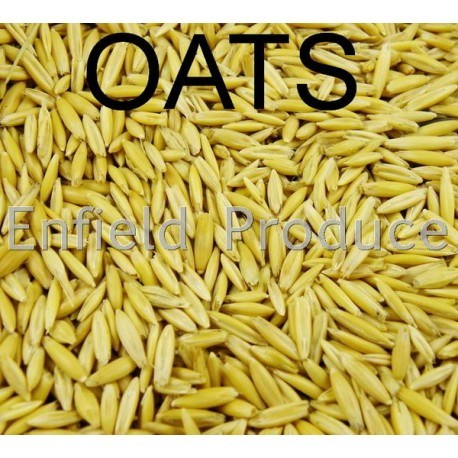 Doves For Sale >> Whole Oats Grain for Sale - Shop Online or @ Sydney Store : ENFIELD PRODUCE
