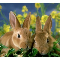 baby rabbits for free. main 03f6a9f90c0e2c8343a944f3b4dcc367 baby rabbits for free