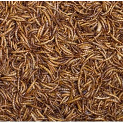 Dried Mealworms (EP)