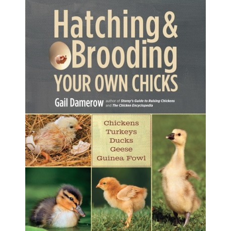 Hatching and Brooding Your Own Chicks Book (Chickens, Turkeys, Ducks...)