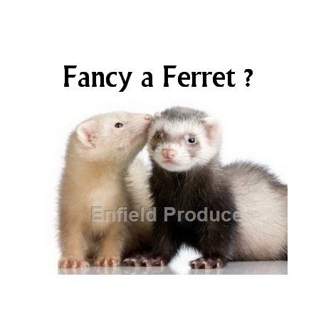Ferrets For Sale Sydney Strathfield Pet Shop