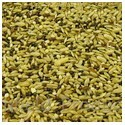 Bird Seed & Grains