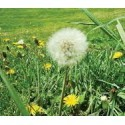 Lawn Pests & Weeds