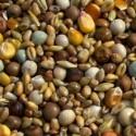 Pigeon Seed & Grain